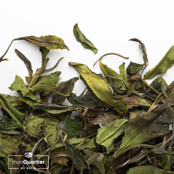 Tea Studio   Nilgiri Bai Mu Dan