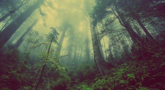 Éco-anxiété: Groupe de soutien et de discussion