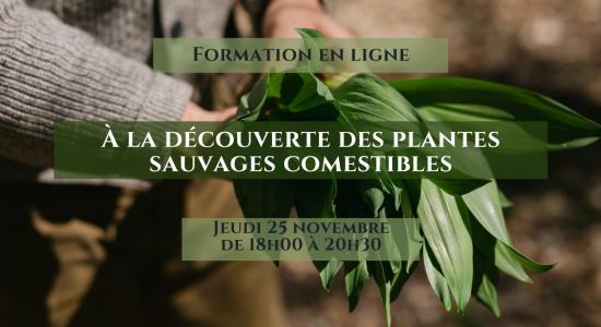 Formation: À la découverte des plantes sauvages comestibles