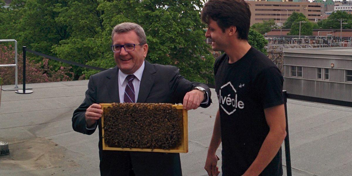 Des ruches urbaines sur l'édifice F.-X.-Drolet : la Ville de Québec lance un projet pilote   5 juin 2017   Article par Suzie Genest