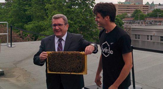 Des ruches urbaines sur l'édifice F.-X.-Drolet : la Ville de Québec lance un projet pilote - Suzie Genest