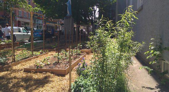 Verdir Saint-Roch dévoile son potager et ses ateliers de jardinage gratuits - Jessica Lebbe