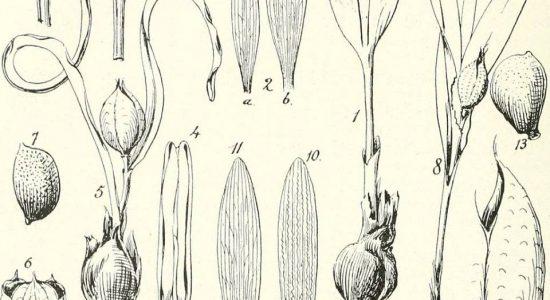 Formation sur la réalisation des semis