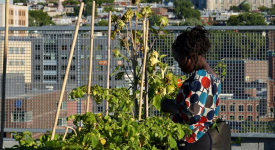 Les couleurs du jazz pour le Centre multiethnique de Québec - Jean Cazes