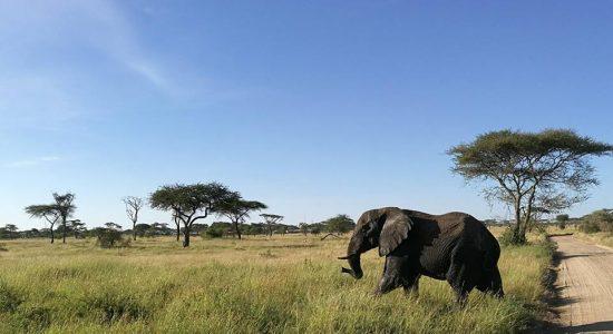 Conférence sur la Tanzanie : Ascension du Kilimandjaro et safari