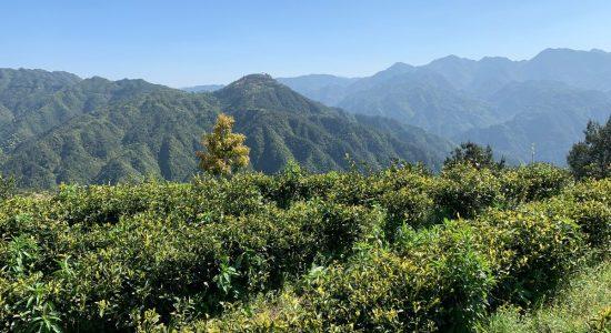Arrivage 2019 des thés au Camellia Sinensis | Camellia Sinensis Maison de thé