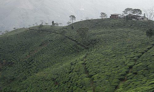 Atelier «Inde – Darjeeling et thés noirs»