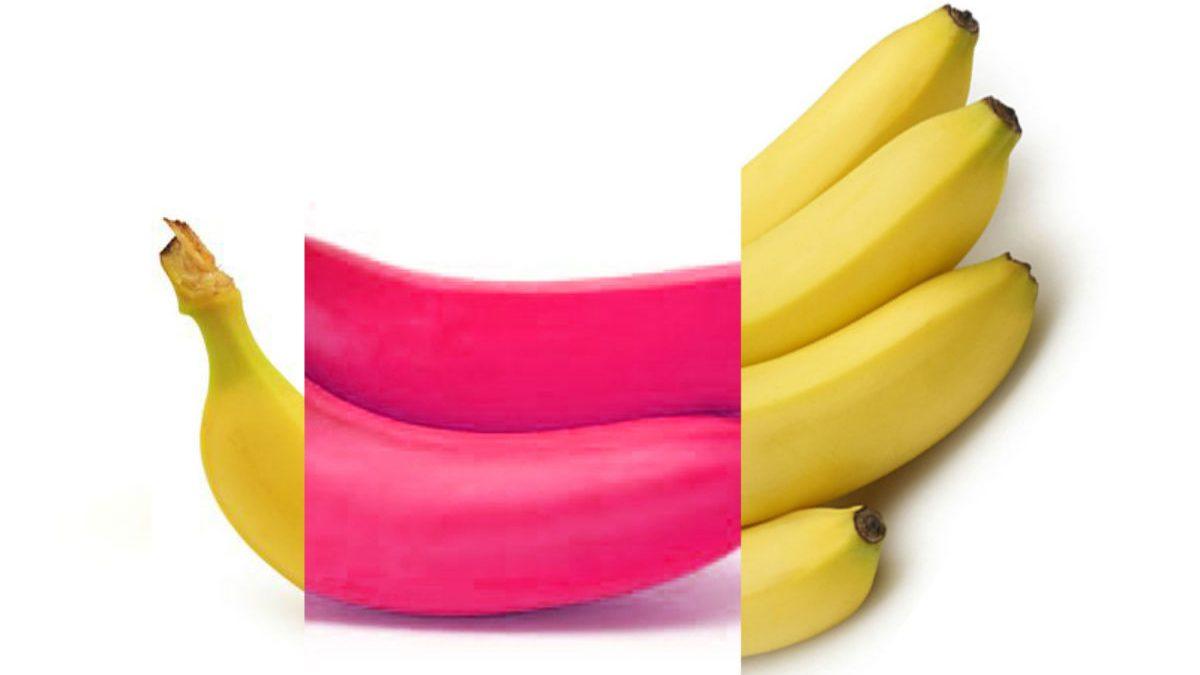 La banane scotchée inspire un événement à Québec | 21 janvier 2020 | Article par Véronique Demers