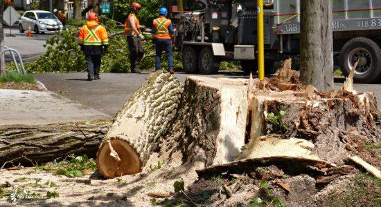 Protection des arbres et des milieux naturels à Québec : malgré un triste bilan, relevons-nous les manches! - Monquartier