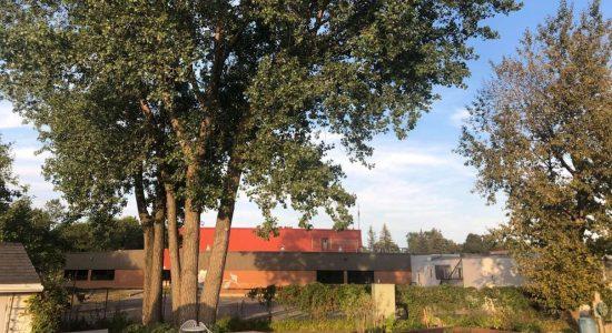 Des arbres coupés pour créer des stationnements - Julie Rheaume