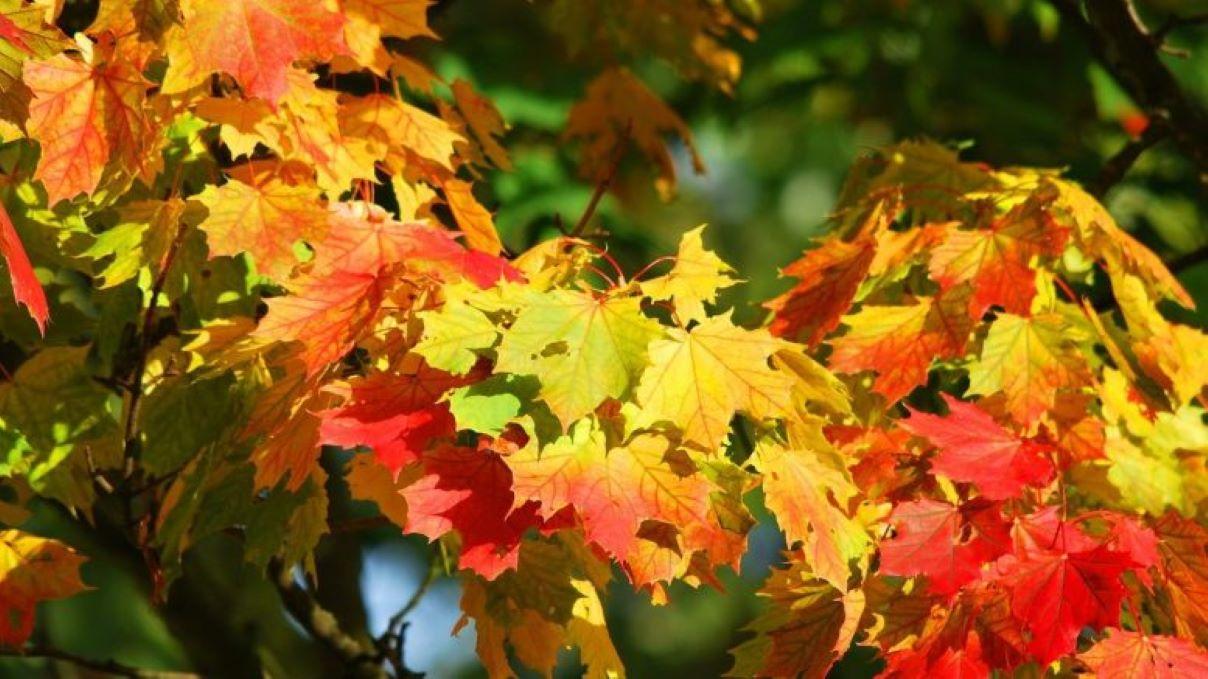 Nouvelle distribution d'arbres pour les citoyens de Québec - Julie Rheaume
